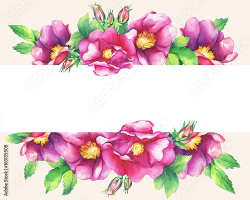 Banner With Flowering Pink Roses Names Dog Rose Rosa Canina