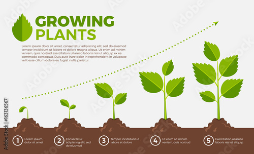 Photo  Different steps of growing plants