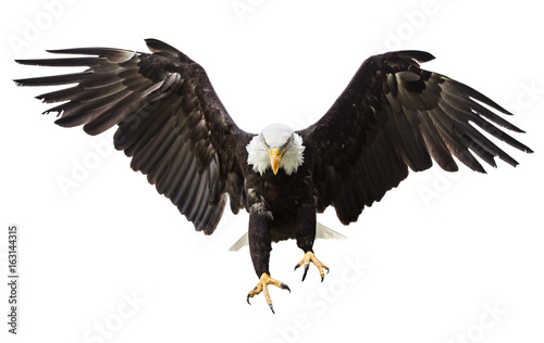 Fotografering  Bald Eagle flying with American flag