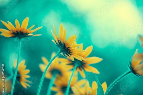 Vintage flower background at sunlight