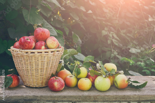 Fotografija  Baskets with apples harvest in fall garden