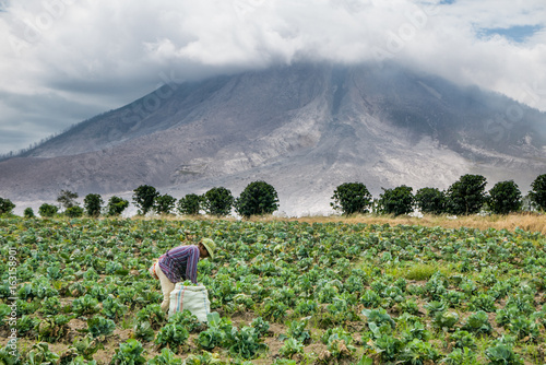 Deurstickers Vulkaan SINABUNG VOLCANO, SUMATRA, INDONESIA - September 28, 2016: Unidentified woman farmer ignores the volcano eruption and continues her work. Eruption of Sinabung killed several people in recent years