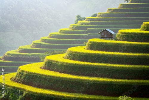 Vietnam rice field on terraced mountain green and cottage on the farming Agriculture of Vietnam.