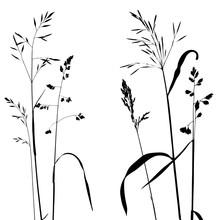 Vector Wild Cereal Plants