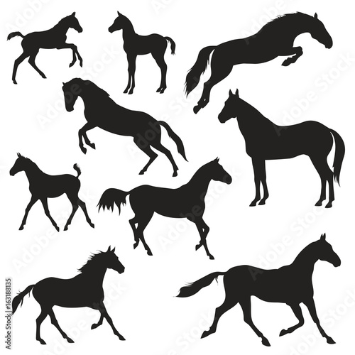 Canvas Print black horses silhouettes on white background