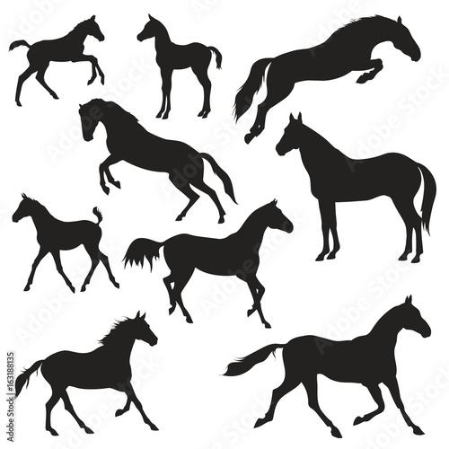 Leinwand Poster black horses silhouettes on white background