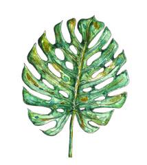 fototapeta akwarela liści palmowych