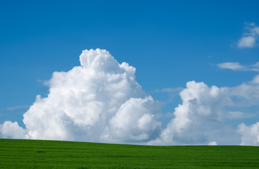 Summer landscape with a green field and a cloud on a blue sky