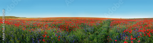 Panoramic view of field covered with flowers poppies and bells