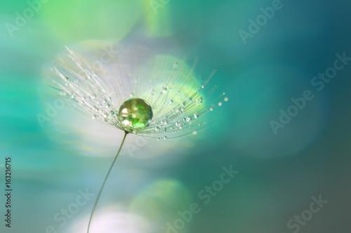 kropla-zielen-na-dandelion-ziarna-zblizeniu-piekny-tlo-turkusu-i-zieleni-cienie