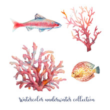 Watercolor Nautical Set. Hand Painted Underwater Objects: Fishes And Corals Isolated On White Background. Sea Design Elements