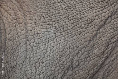 Southern white rhinoceros (Ceratotherium simum simum).