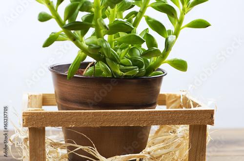 Close up plant on wooden table decor acheter cette photo libre de droit et d couvrir des - Plant de rhubarbe a vendre ...