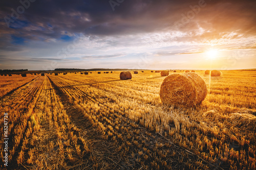 Valokuva  Field with yellow hay bales at twilight glowing by sunlight