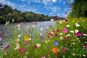 FototapetaBeautiful flowers over river