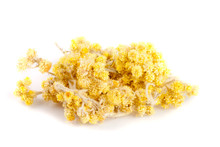Dried Helichrysum Or Immortell...