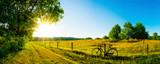 Fototapeta Nature - Landschaft im Sommer mit Bäumen und Wiesen bei strahlendem Sonnenschein