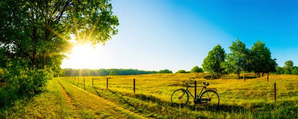 Fototapeta Landschaft im Sommer mit Bäumen und Wiesen bei strahlendem Sonnenschein
