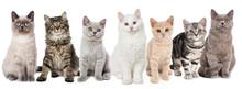 Verschiedene Junge Katzen