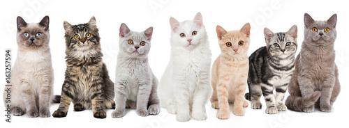 Verschiedene junge Katzen Tableau sur Toile