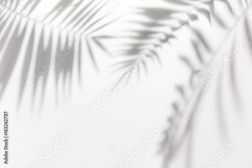 Spoed Foto op Canvas Palm boom Shadows from palm trees on a white wall