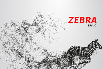 Fototapeta na wymiar Zebra, particle divergent composition, vector illustration. Silhouette of a zebra from particles.
