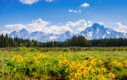Fotomural  Mountain range in spring in Grand Tetons National Park