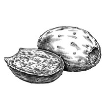Engrave Isolated Prickly Pear Hand Drawn Graphic Illustration
