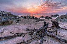 Long Exposure On The Rotten Branches At The Beach At Sunrise.