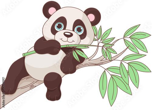 Photo sur Aluminium Magie Baby Panda