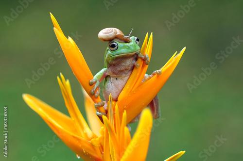 frog, dumpy frog, tree frog, snail,