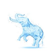 Elephant Water Splash Isolated On White Background