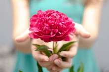 Flower In Girl Hand. Girl Holding Flower In Hands In Front Of Herself.