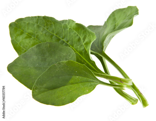 Fényképezés  Plantain leaves isolated on white background closeup