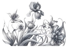 Monochrome Spring Flowers