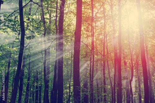 Recess Fitting Bamboo sun beams shine through the trees in autumn