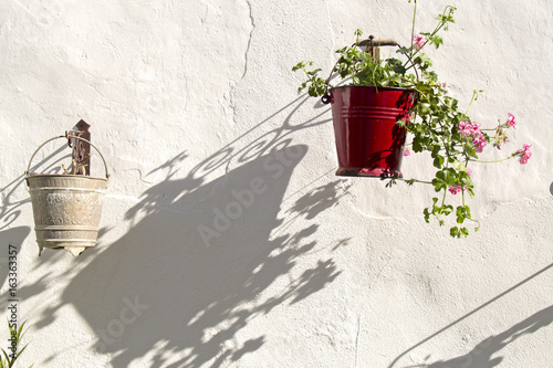 Shadow of a pot with Geranium