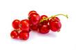 Rot Rote Johannisbeere Johannisbeeren isoliert freigestellt auf weißen Hintergrund, Freisteller