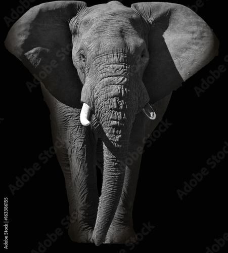 Photo Huge African elephant portrait