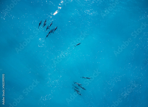 Fotografie, Obraz  Aerial view of Dolphins off the west coast of Oahu Hawaii