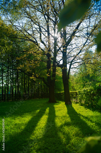 Fototapeten Wald sunny meadow in summer forest