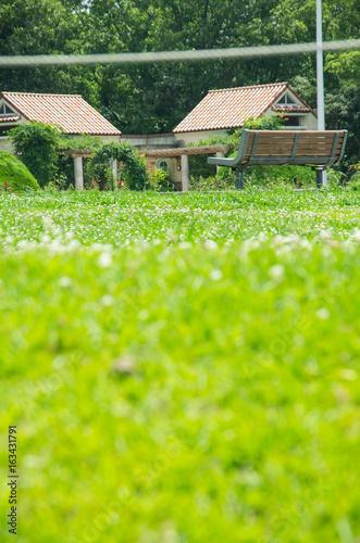 Poster Lime groen ベンチのある公園の風景