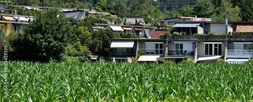 Fotografie, Obraz  champ de maïs