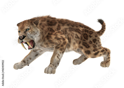 Photo  3D Rendering Saber Tooth Tiger on White