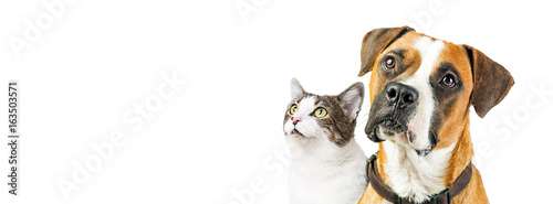Foto op Plexiglas Hond Dog and Cat Together on White Horizontal Banner