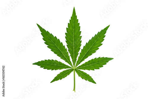 Marijuana leaf on white background