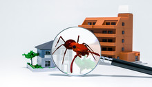 Pest Control Of Residence Concept. 3D Rendered Fire Ant.