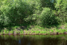Bank Of The River With Trees A...