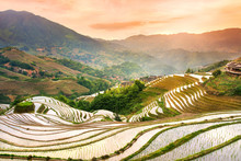 Sunset Over Terraced Rice Field In Longji, Guilin In China