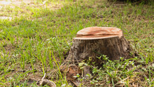 Stump On Green Grass In The Ga...